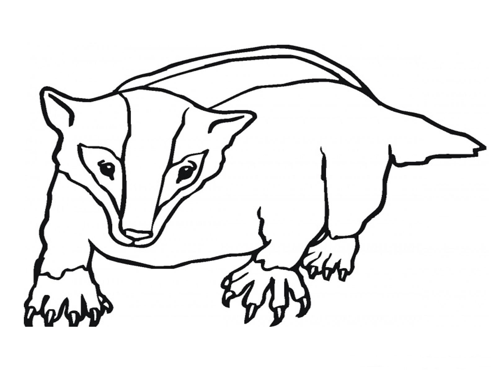 Badger Printable Coloring Pages Animal Coloring Pages Coloring Pages Cartoon Coloring Pages