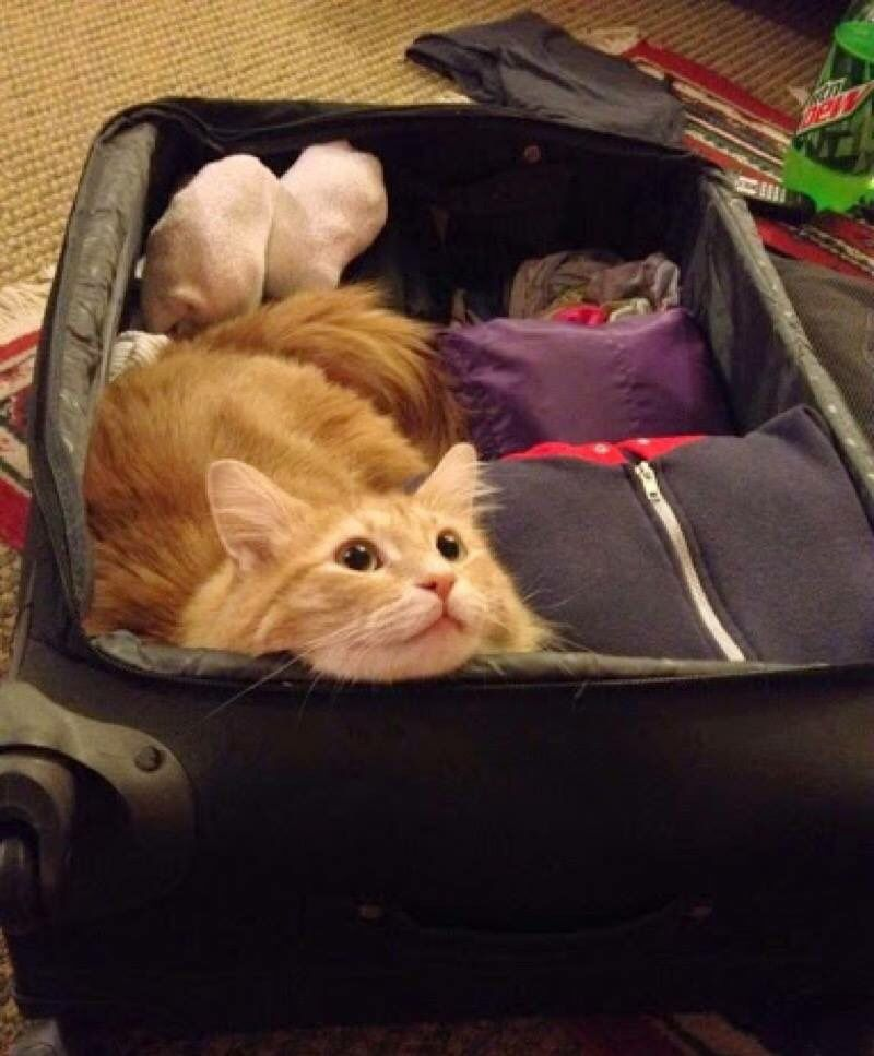 I'm coming too!
