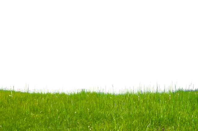 Grass Png Images Free Download Png Images Grass Stock Photos