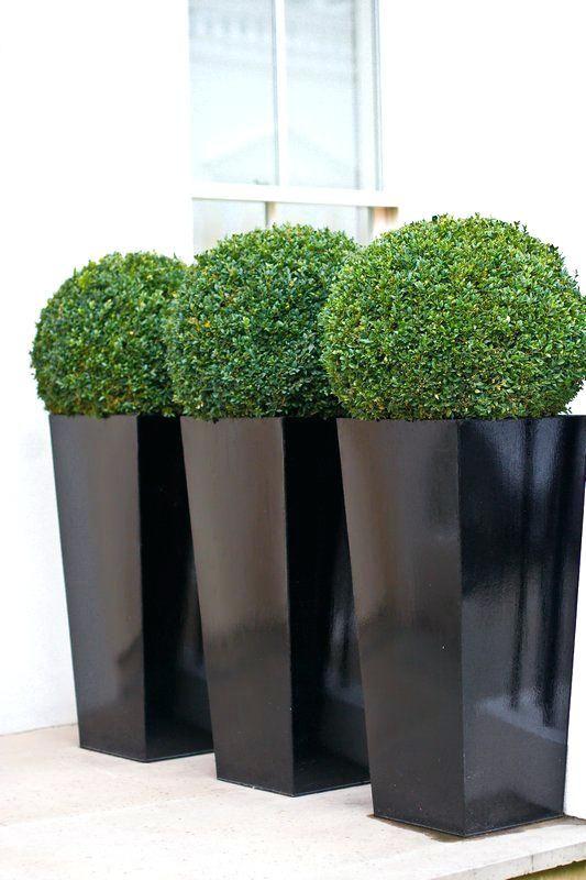 modern outdoor plant pots contemporary outdoor plants for pots rh za pinterest com contemporary outdoor plant pots contemporary outdoor planters and pots