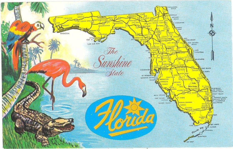 Vintage Florida Postcard Detailed Map Sunshine State Parrot