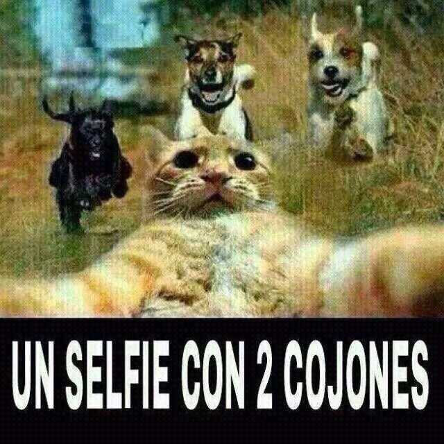 Selfie Gatitos Divertidos Humor Divertido Sobre Animales Imagenes Divertidas De Animales