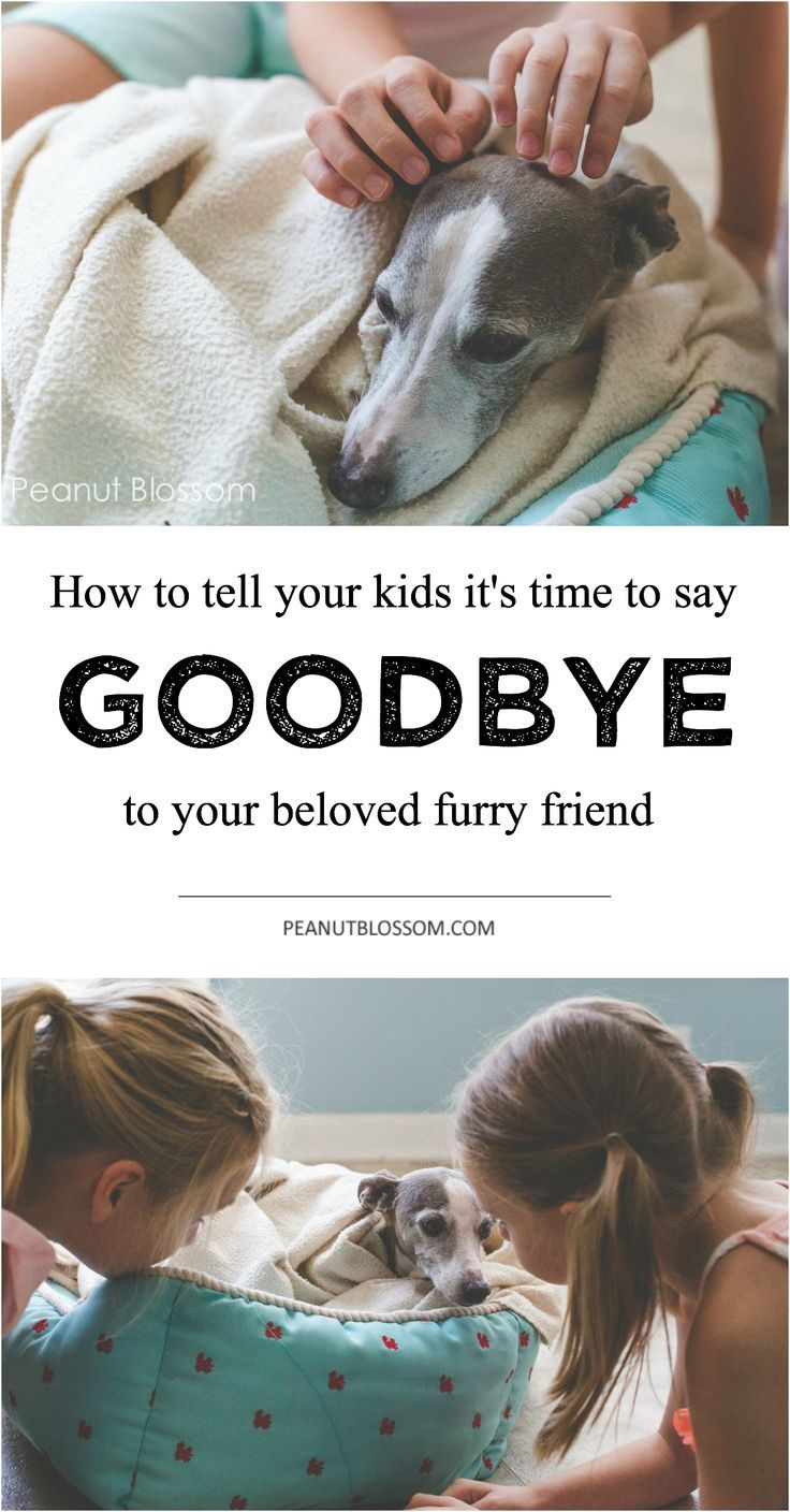 Telling your kids it's time to put your dog to sleep