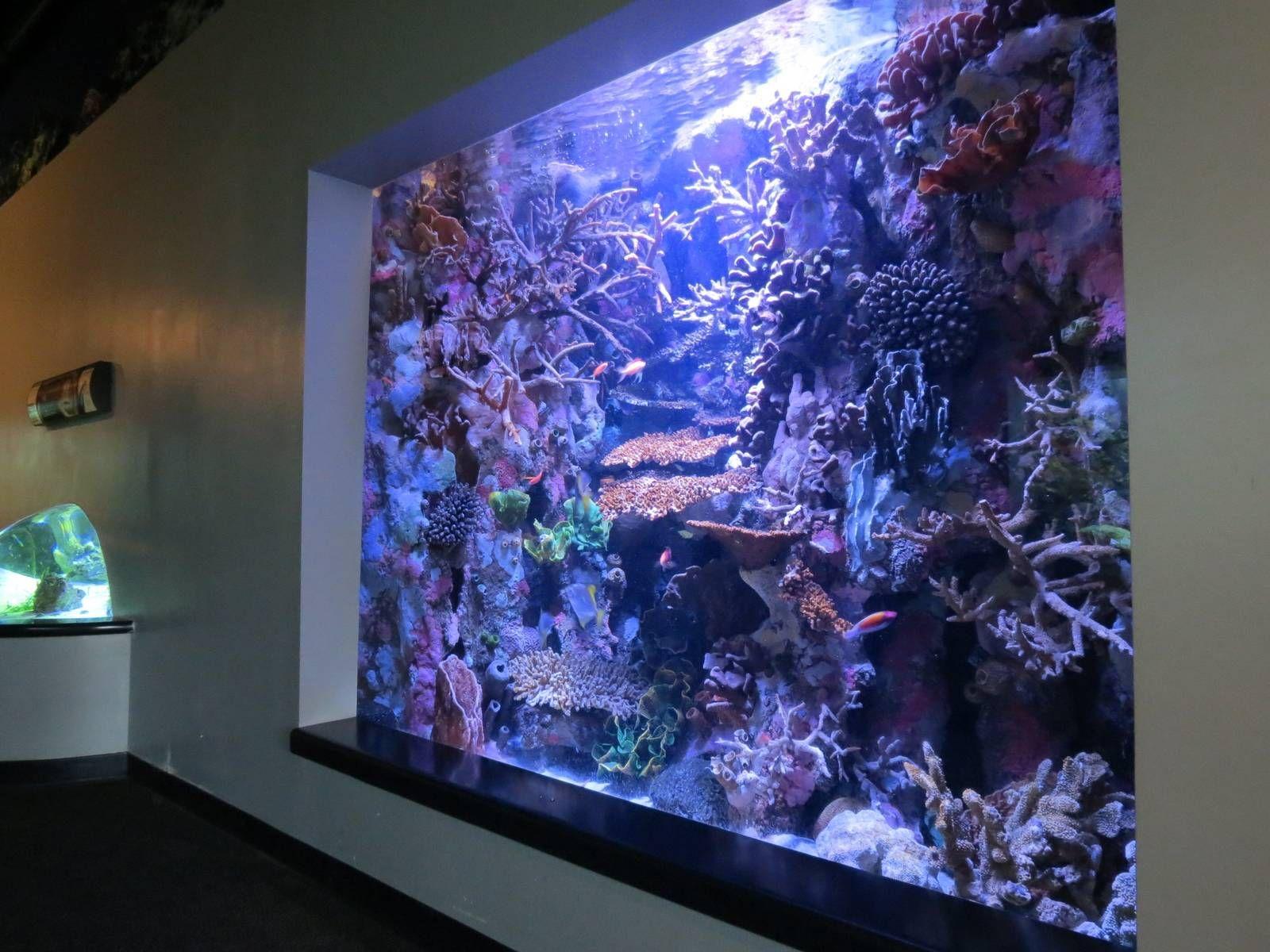 67cee629f6682c9db128194ae533689f Frais De Fabriquer Aquarium Concept