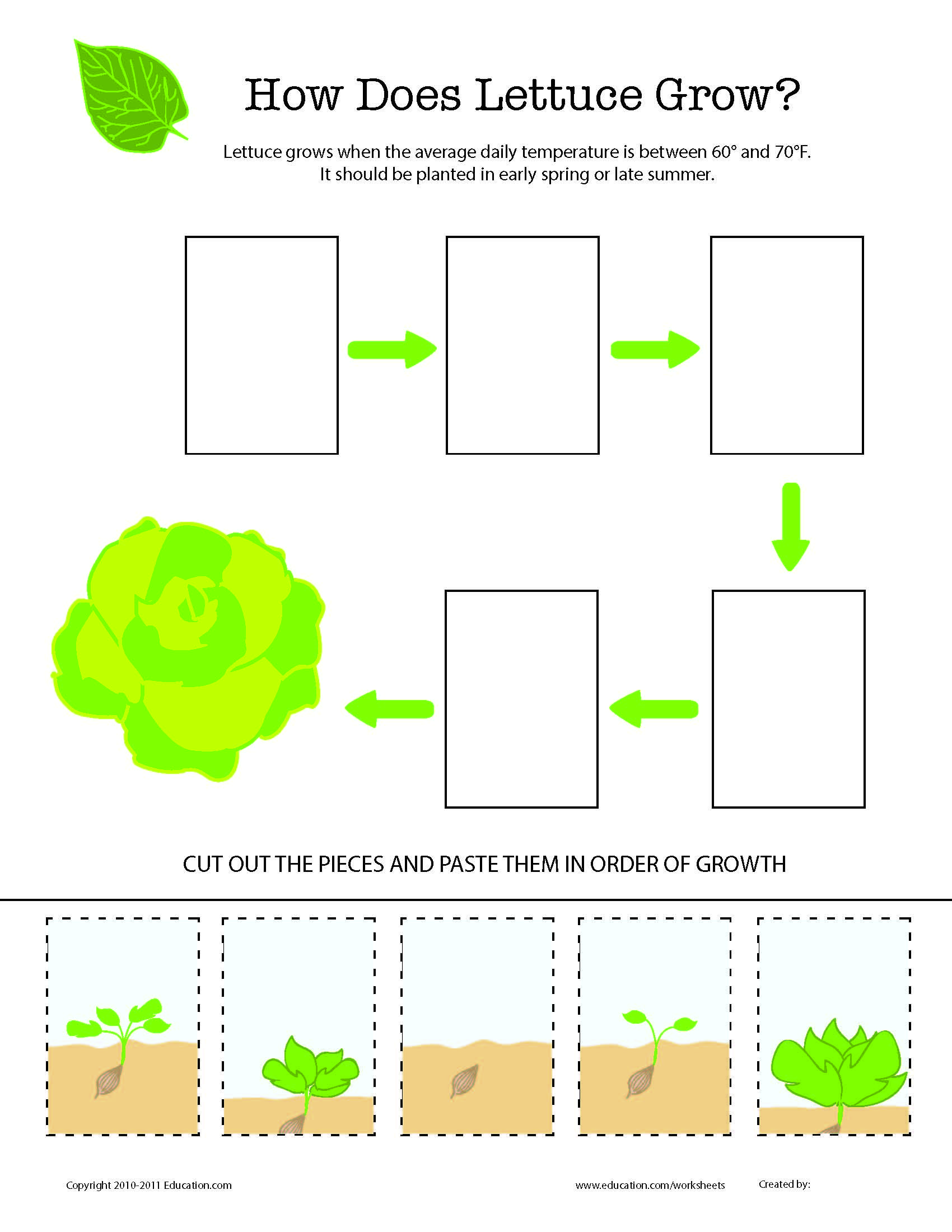 worksheet Stages Of Plant Growth For Kids Worksheets how does it grow lettuce worksheets and kindergarten great worksheet for or 1st grade from www education com