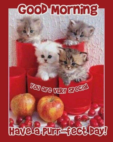 Love the kittens
