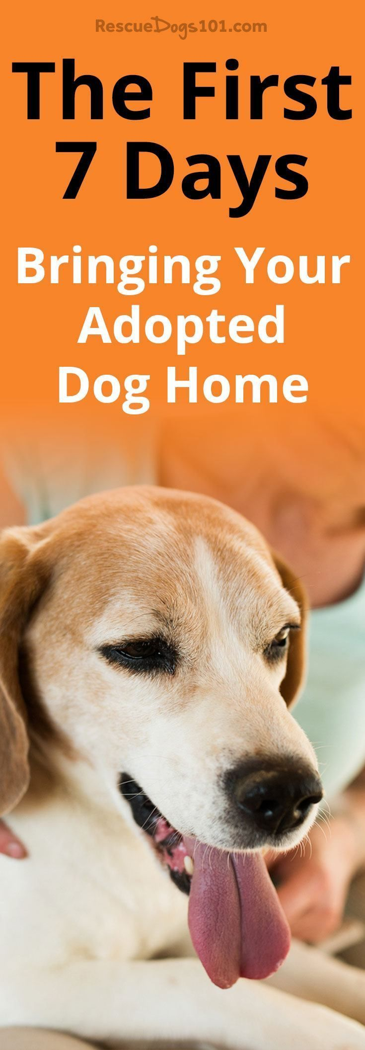 The First 7 Days Bringing Your Adopted Dog Home Dogs