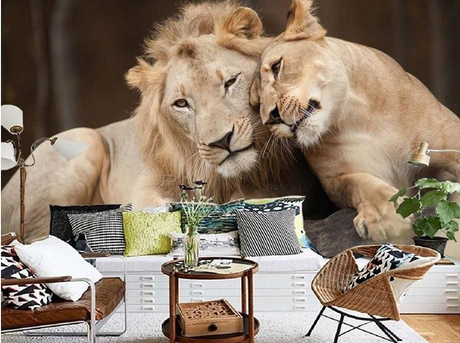 Cuddling Lion Couple 3d Wallpaper High Quality Animal Print Mural Animal Mural Lion Mural Animals