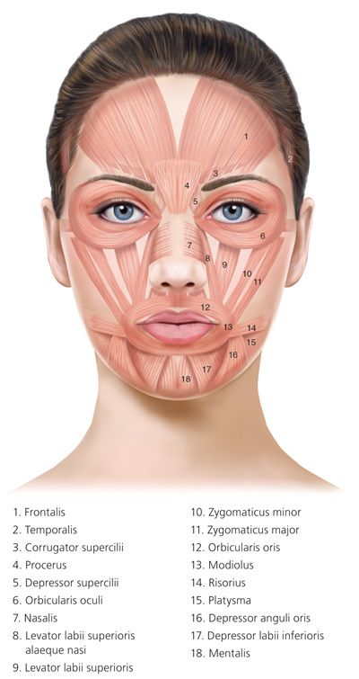 botulinum toxin injection for facial wrinkles - american ... label eye diagram quiz botox eye diagram