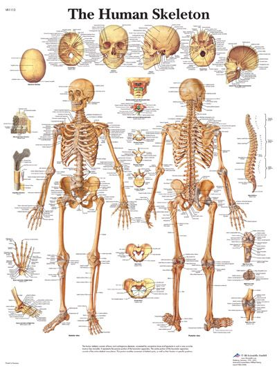 names of bones in human skeleton diagram venn comparing prokaryotic and eukaryotic cells can you name the body my favorite science