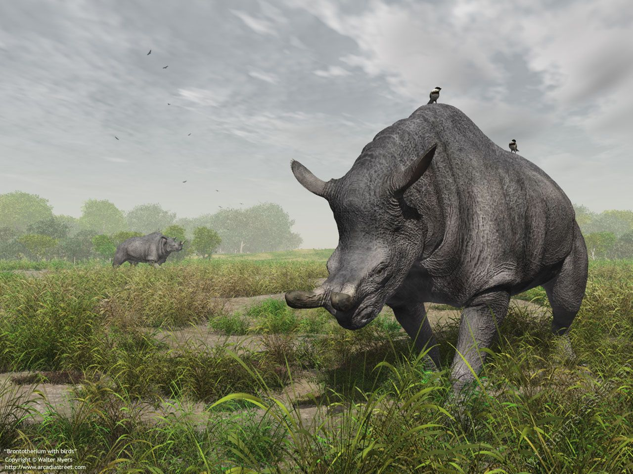 Cenozoic Earth - Two Brontotherium with birds under a ...
