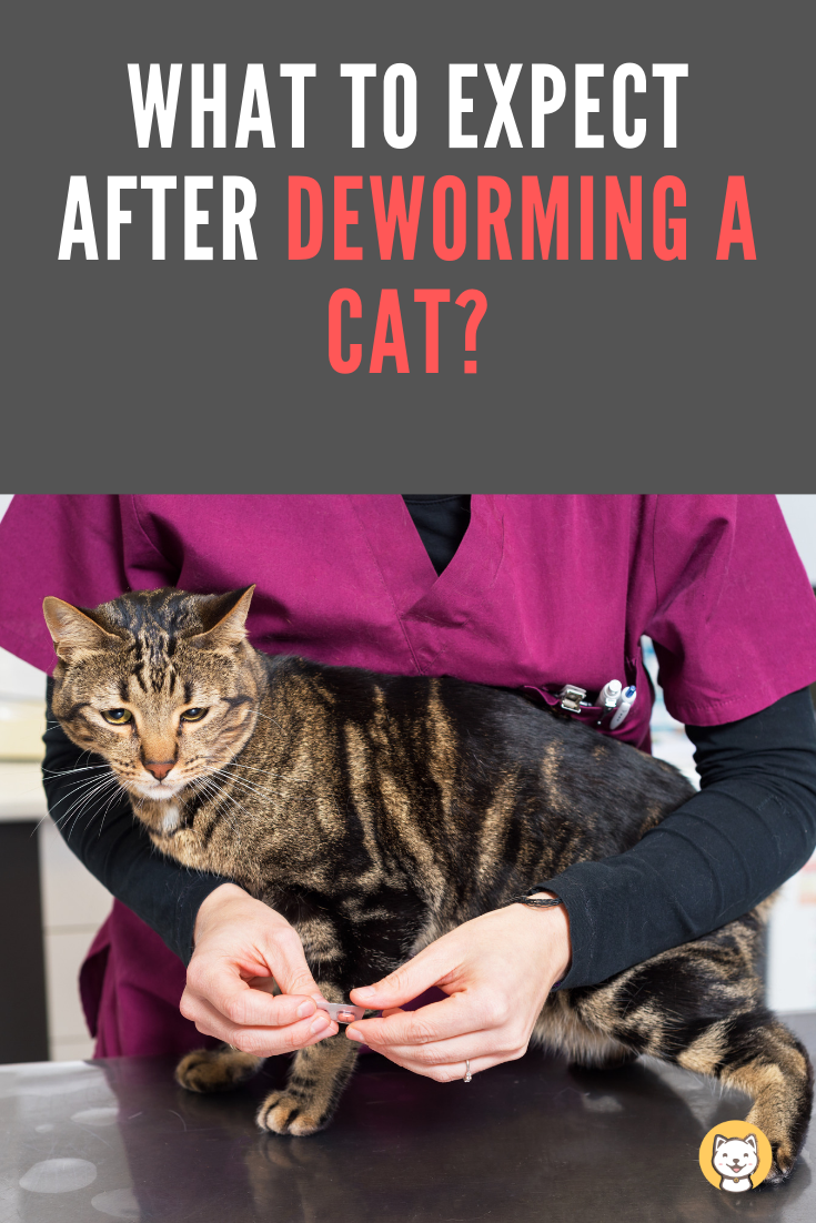 What To Expect After Deworming A Cat Updated 2020 Kitty Cats Blog Cat Worms Cats Cat Dewormer