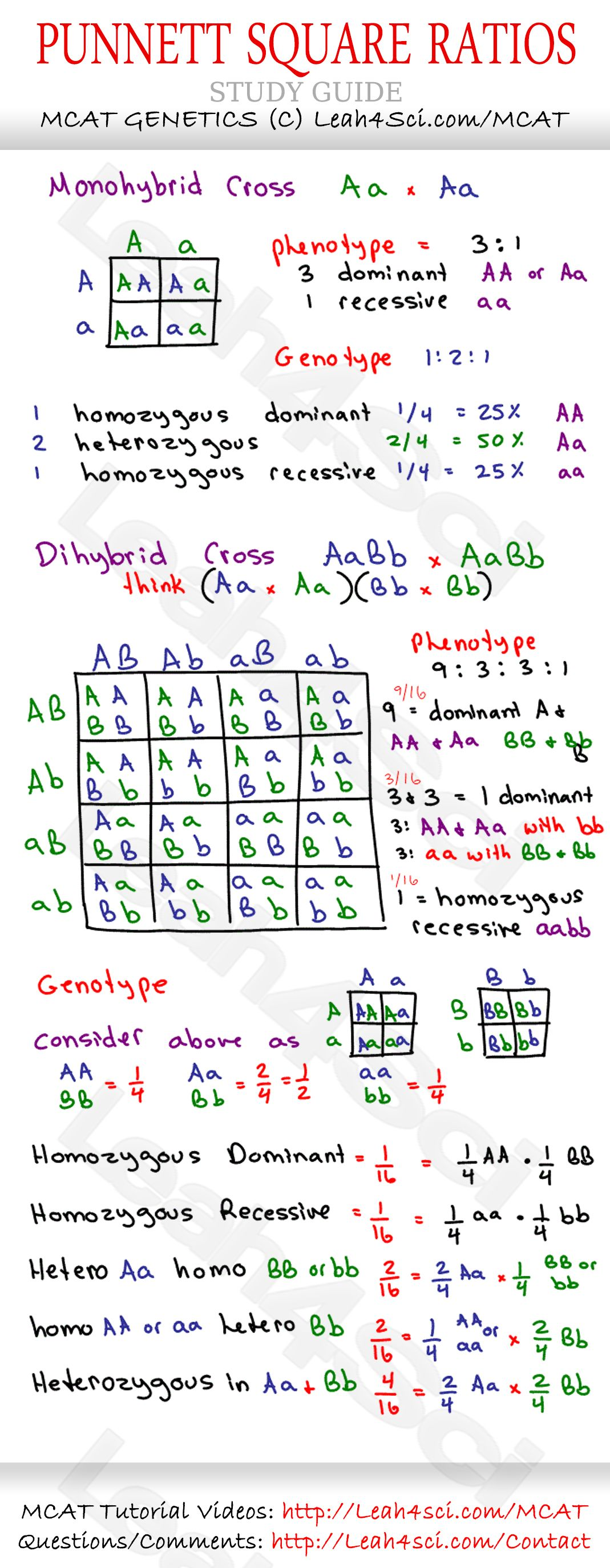 Punnet Square Ratios Mcat Genetics Cheat Sheet Study Guide