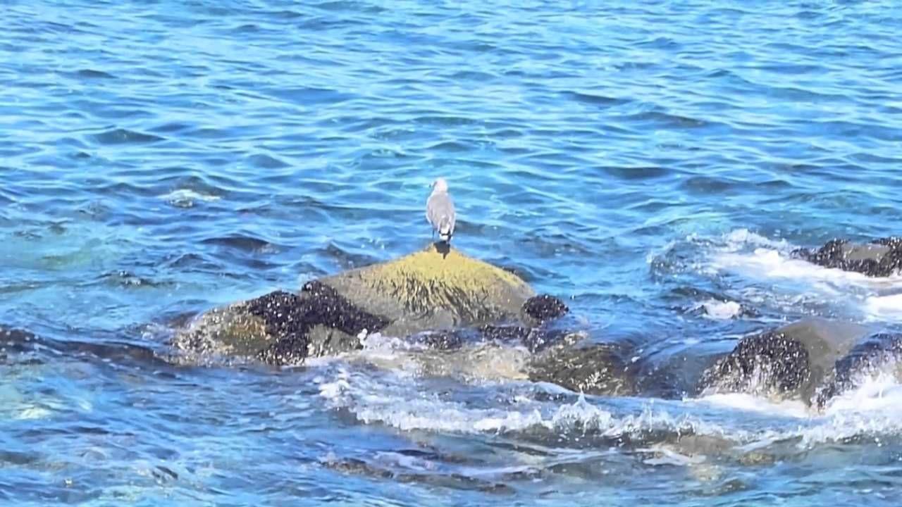 Скачать звуки море