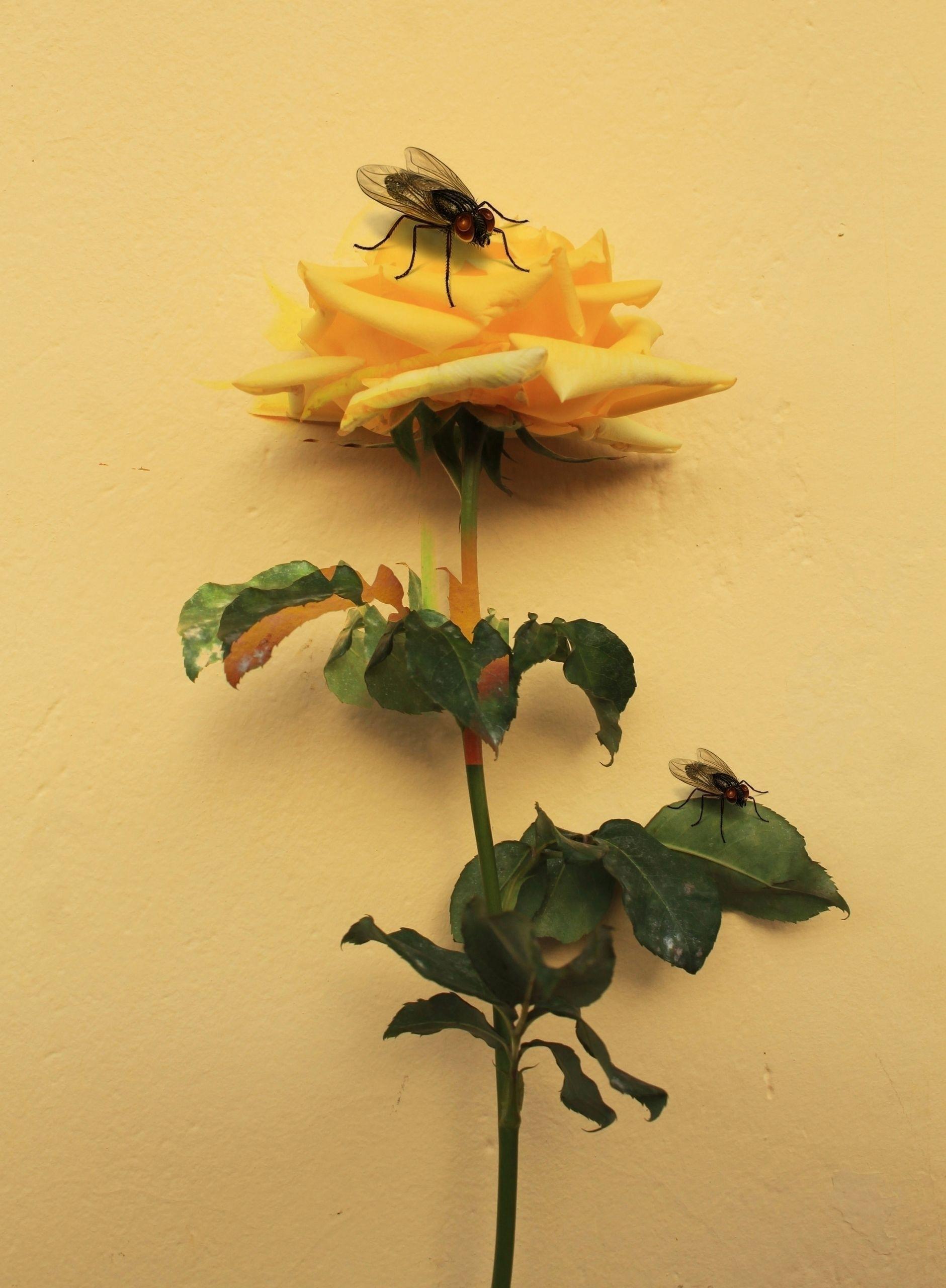 Spring - digitalcollage, flower - franalvez | ello