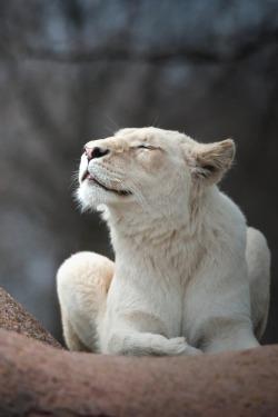 newhybridkilla Animals, Wild cat breeds, Animals beautiful