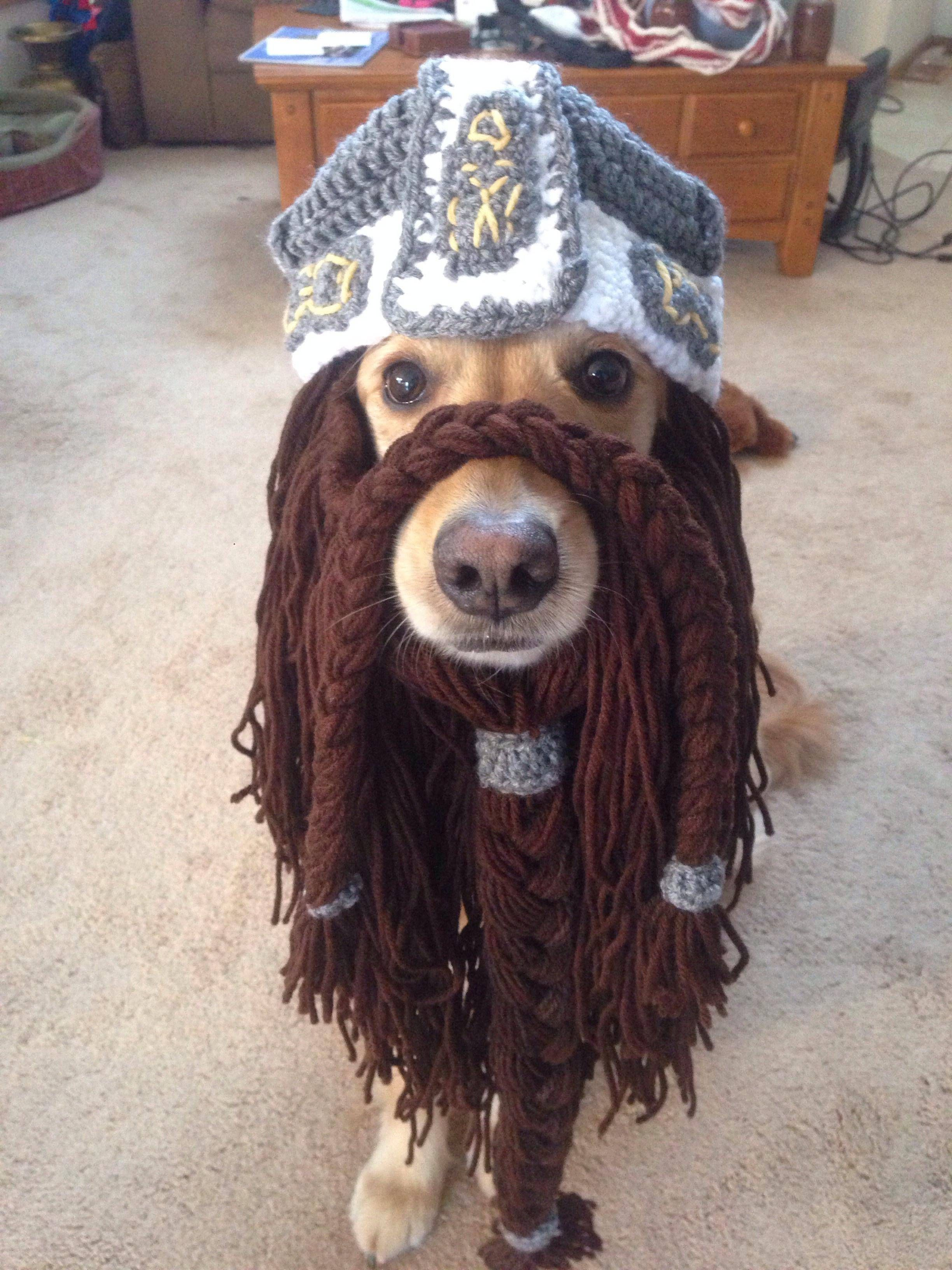 dog in a Gimli beanie
