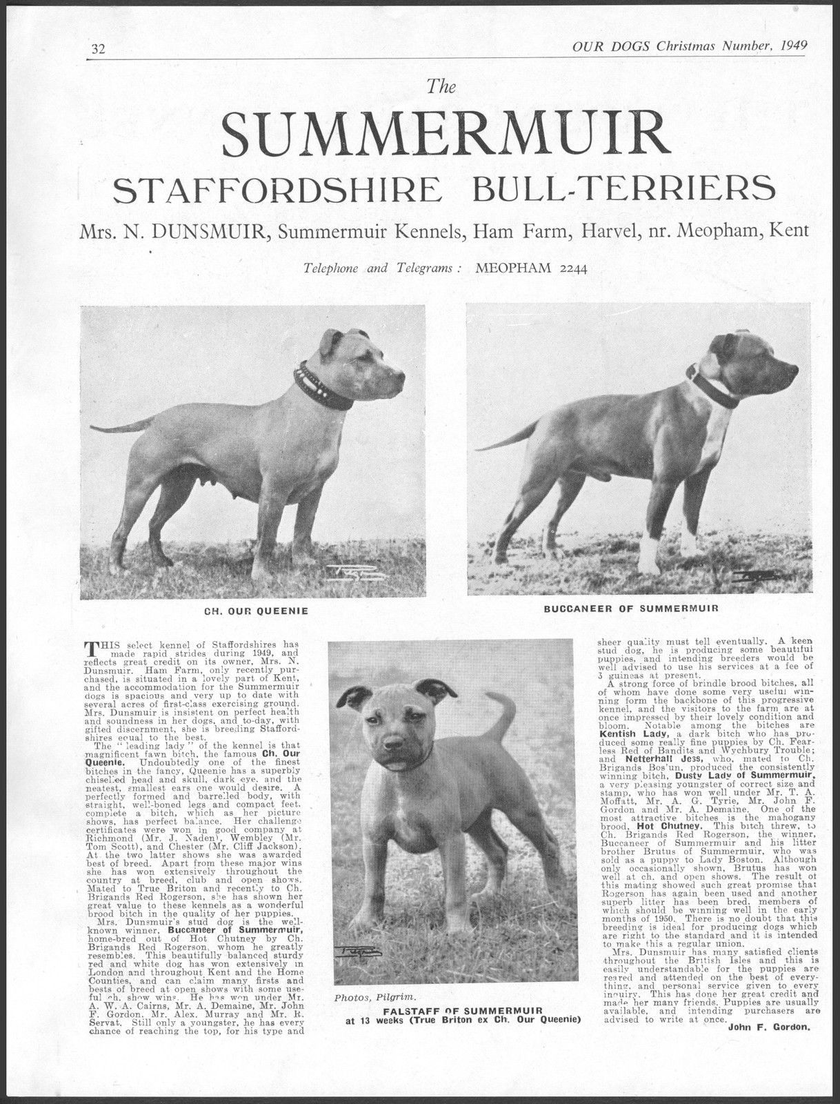 Staffordshire Bull Terrier Our Dogs Vintage 1949 Breed Kennel Staffordshire Bull Terrier Staffy Bull Terrier Staffordshire Dog