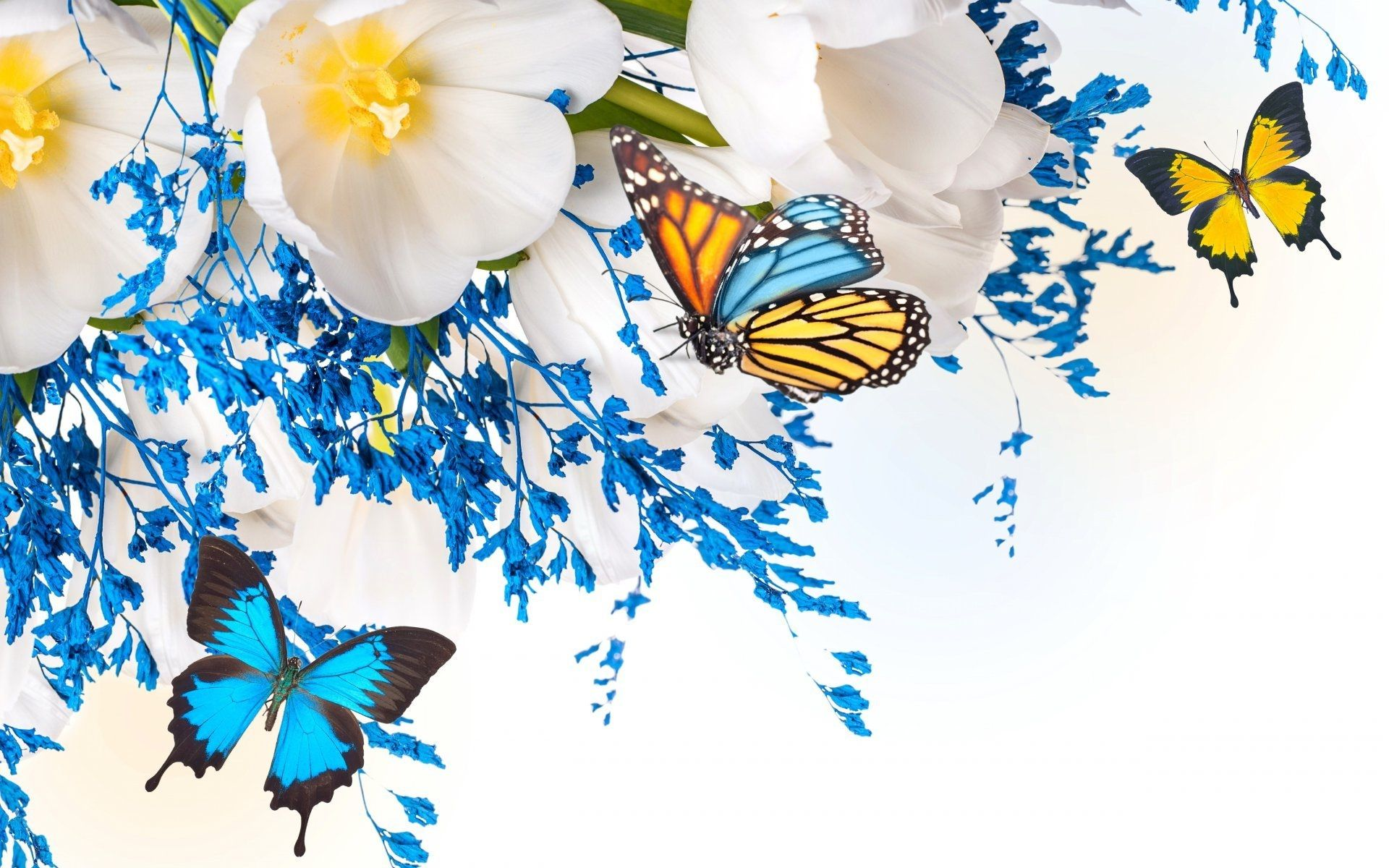 Hd Images Of Flowers And Butterflies