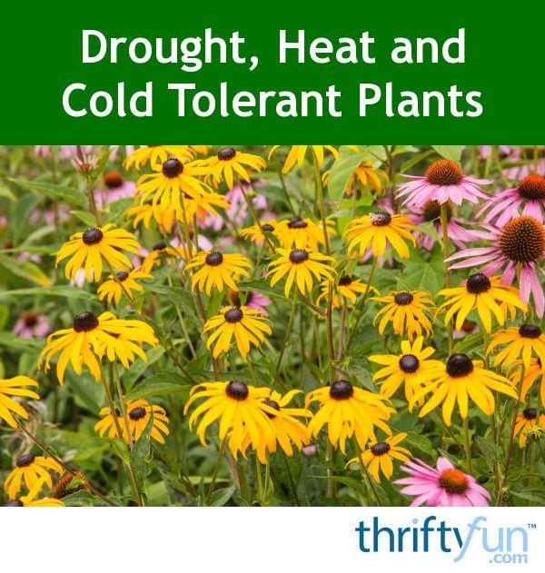Drought Heat And Cold Tolerant Plants Drought Tolerant 400 x 300