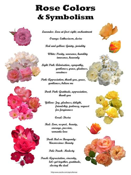 Rose Colors And Their Meanings Rose Color Meanings Chart Flower