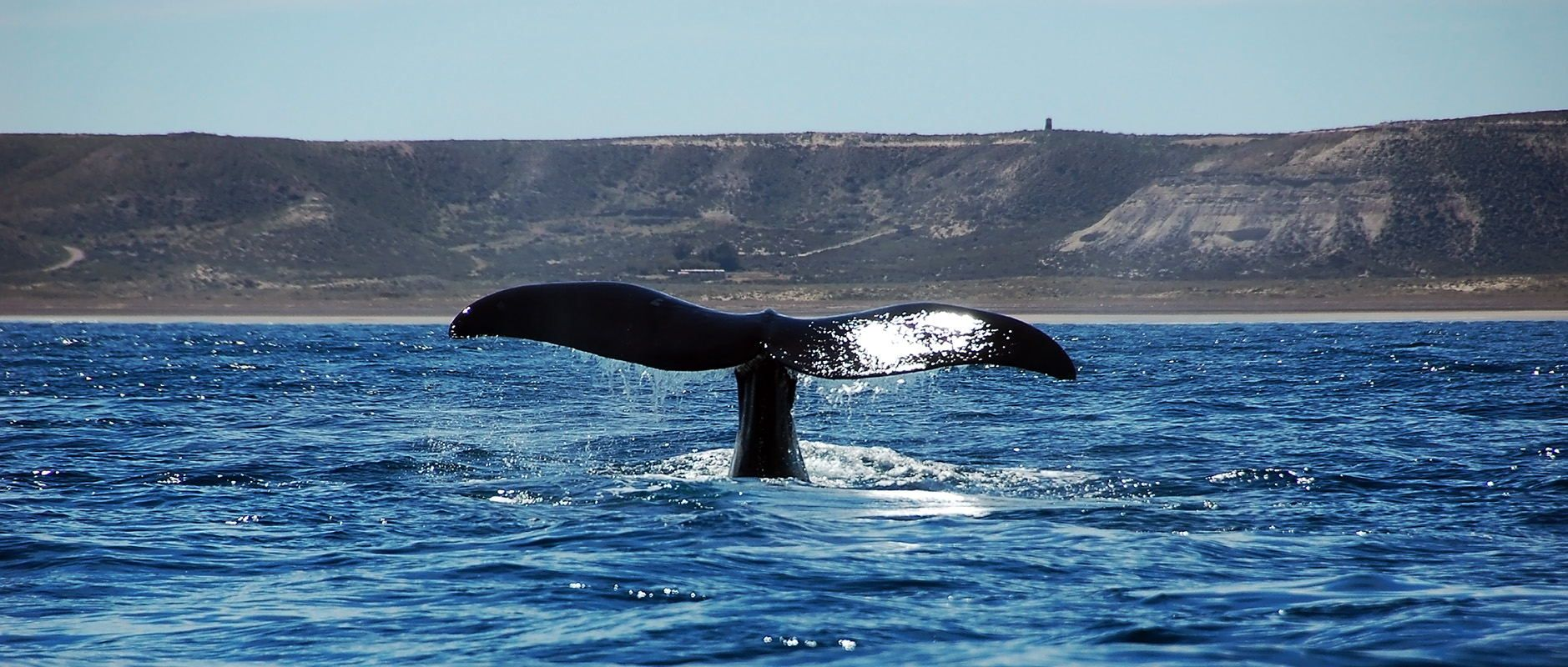Whale watch in Argentina