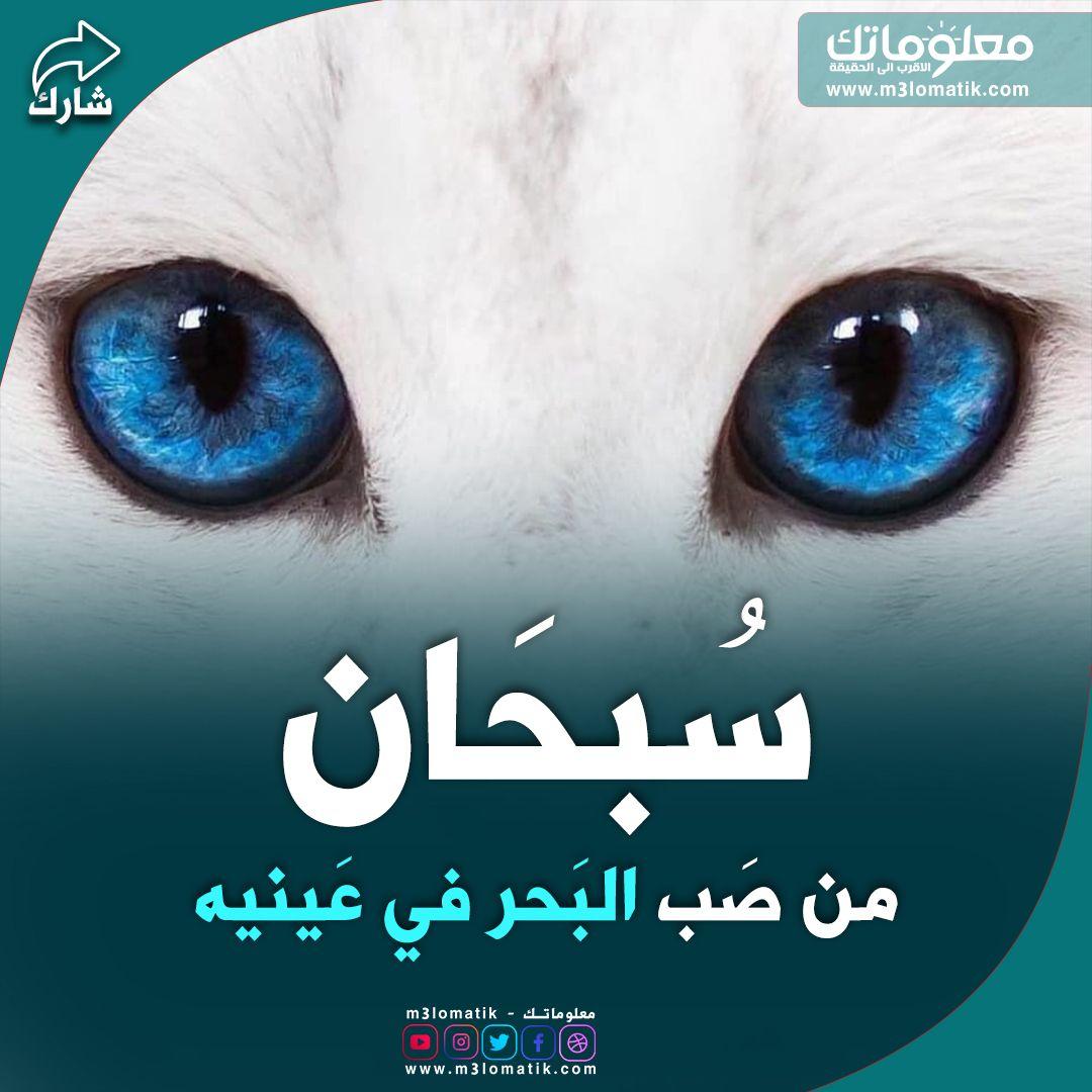 سبحان الله Movie Posters Poster Movies