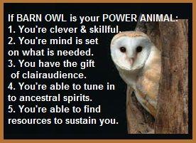 animal spirit guide barn owl   Animal Spirit Guides ...