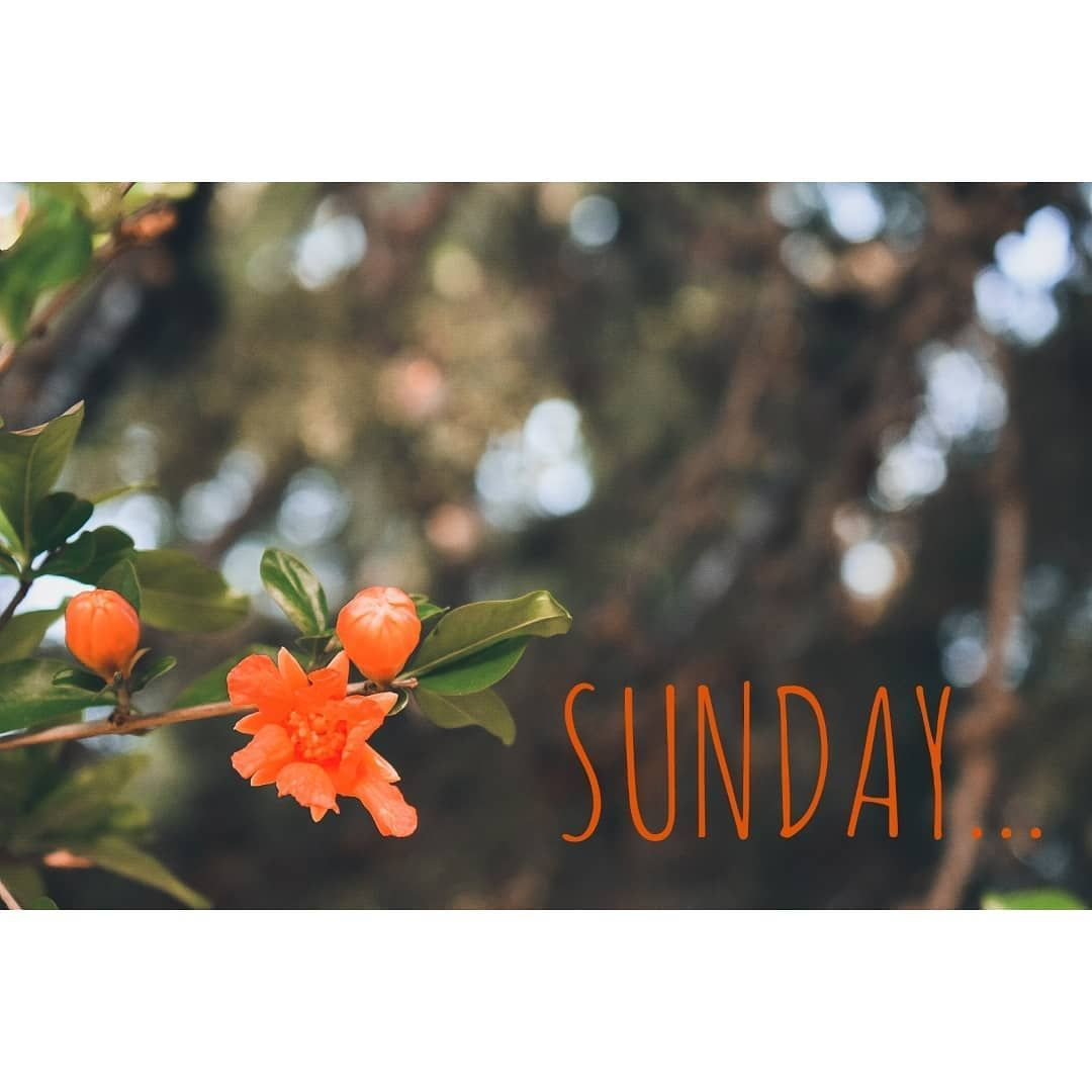 Sundays be like_ . . . . . . #cevahirjewels #cevahir #jewels #handmadejewelry #silver #sundaymorning #nature #sunday #sundayvibes #sundaymood #sundayfunday #sundaybest #sundaylove #sundayafternoon #morning #bestsunday #mysundayfunday #sundaymotivation #instagram #photooftheday #picoftheday #photography #photographer #photograph #evdekal