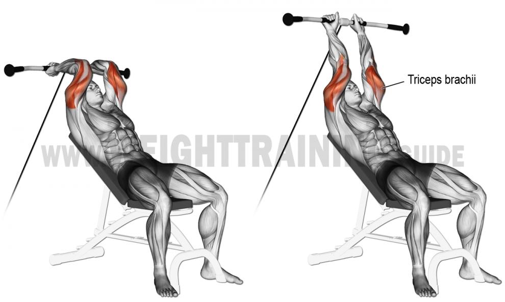 Comment effectuer les extensions triceps poulie basse sur