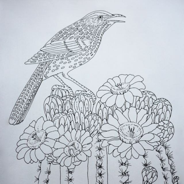 Colouring Page Painting Cactus Wren On A Saguaro Cactus Bird