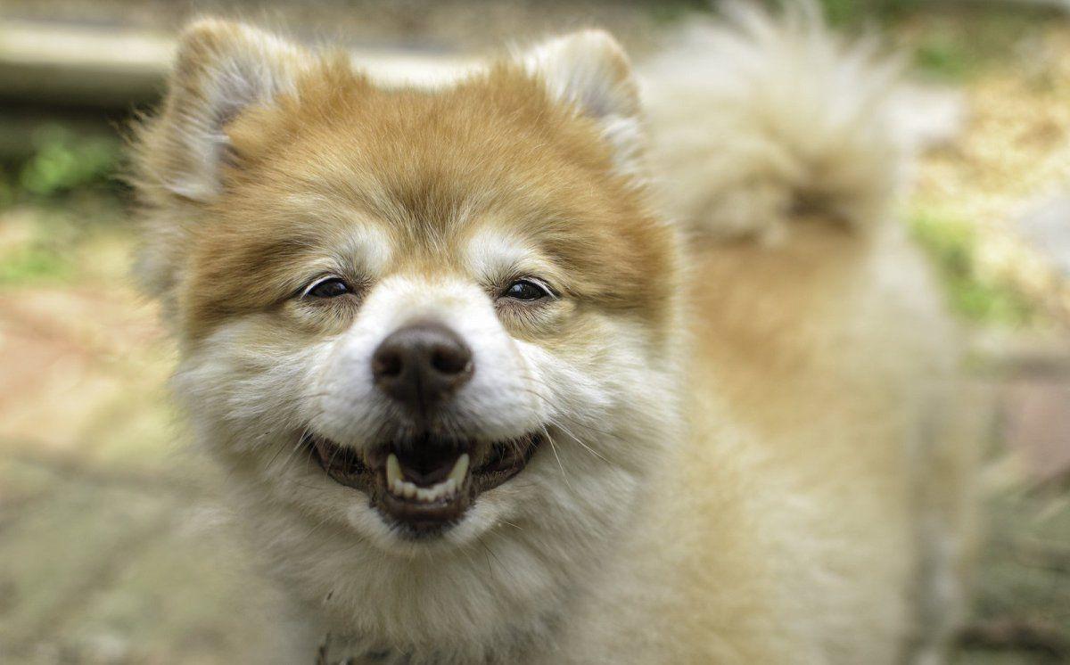 Why You Should Consider Adopting a Senior Dog Pet