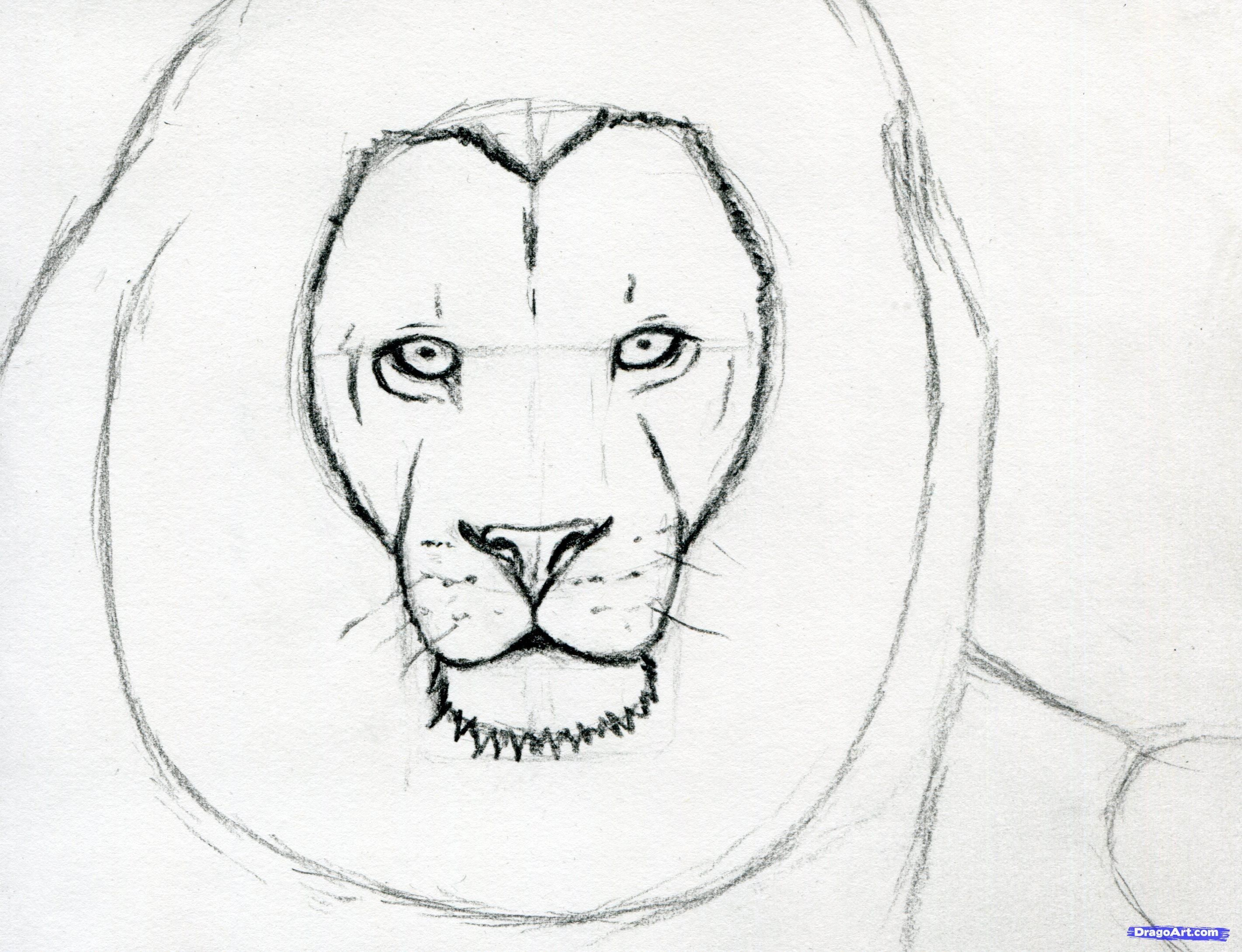 How To Sketch A Lion Step 7 Stepbystepfacepainting In 2019