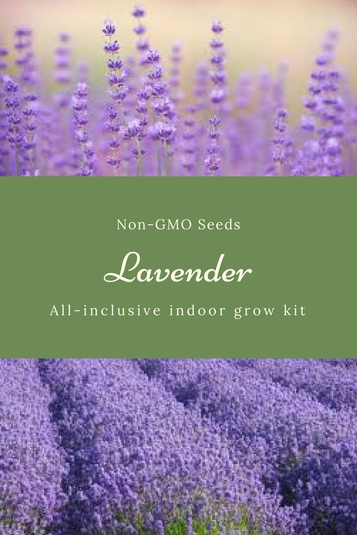 Lavender Is Beautiful Smells So Awesome This Kit Consists Of A Wooden Box That Contains Non Gmo Seeds Plant Food Grow Plants Indoor Grow Kits Growing Food