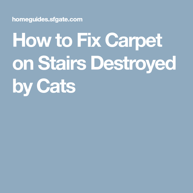 Best How To Fix Carpet On Stairs Destroyed By Cats Carpet 400 x 300