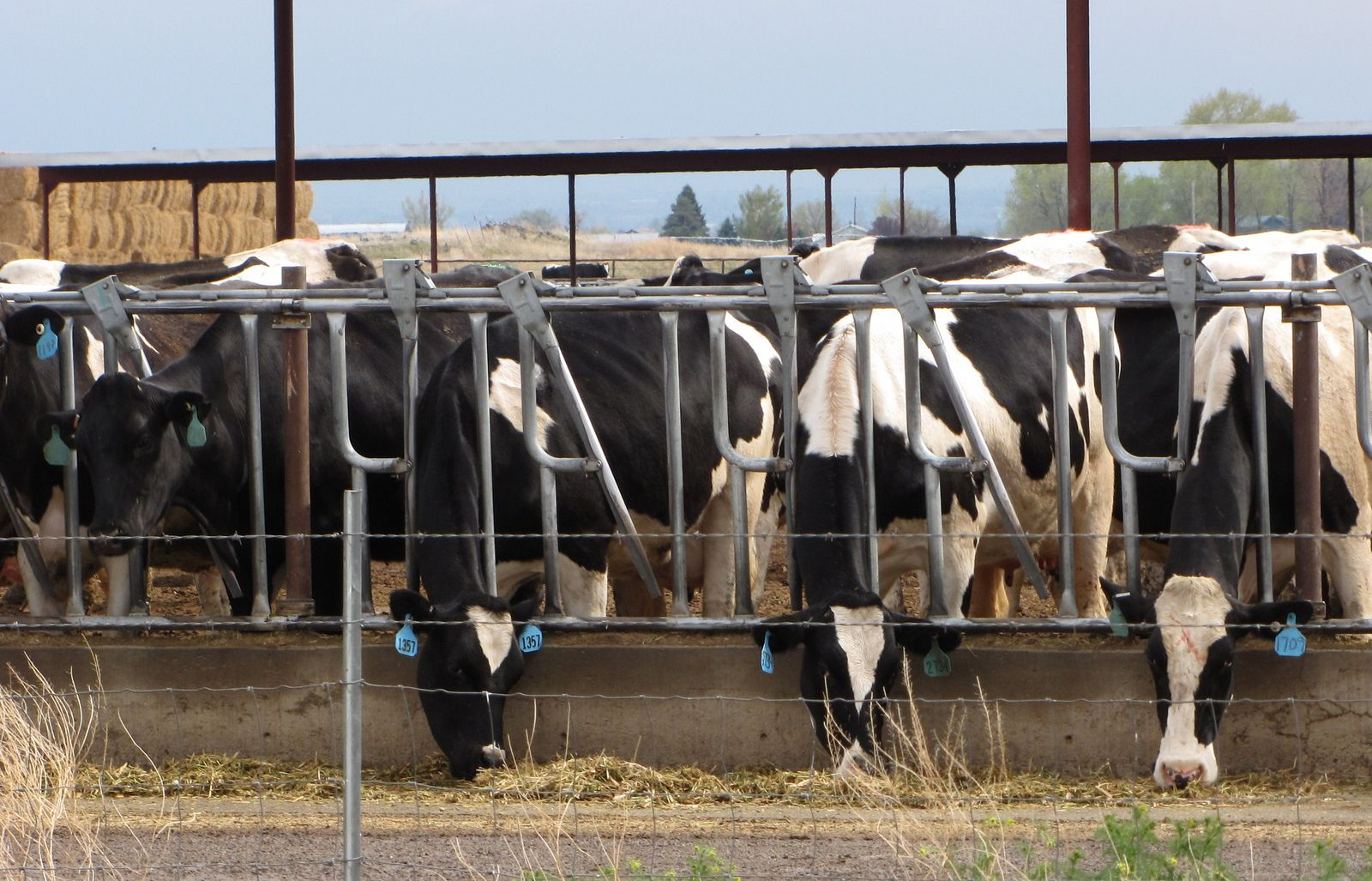 How Planting Crops Used To Feed Livestock Is Contributing