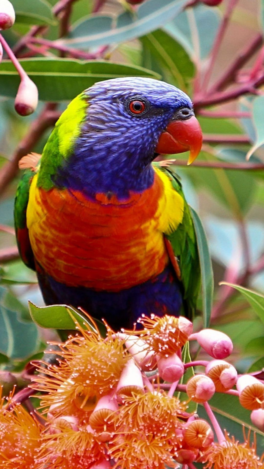 14+ Little birdie crafts australia information