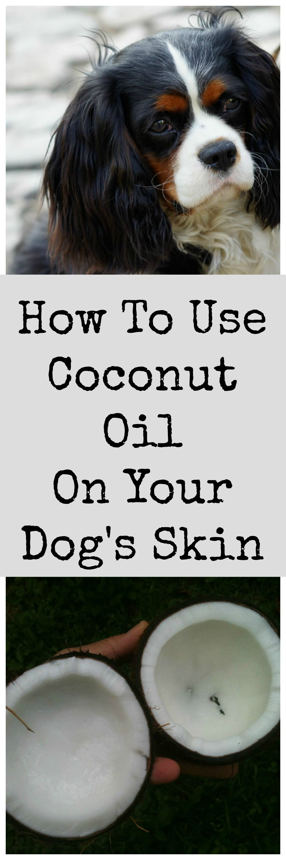 Coconut Oil For Dogs With Dry Skin Coconut oil for dogs