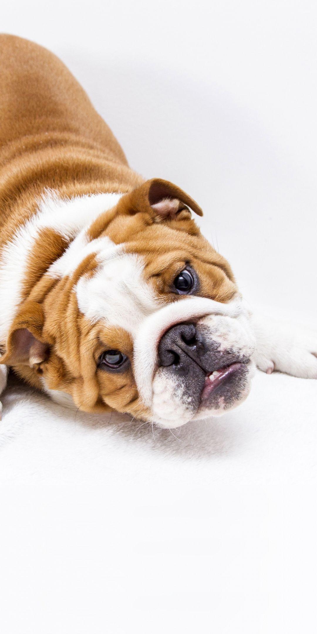 Puppy Cute Dog Play 1080x2160 Wallpaper Cute Animals