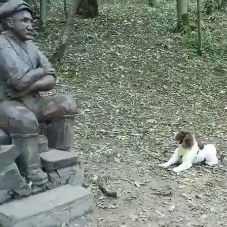 Doggo wants to play