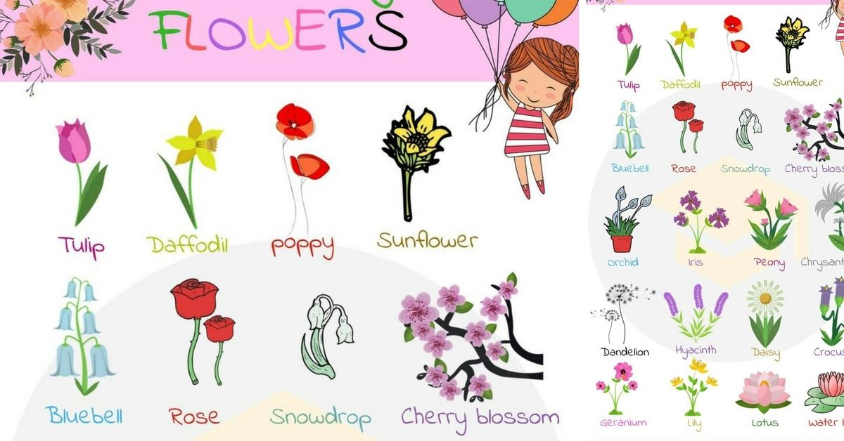 Flowers Names: Useful List Of Flowers With Images (With ...