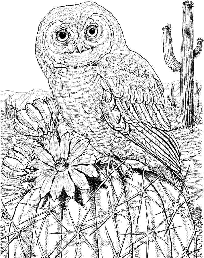 free color pages owls download