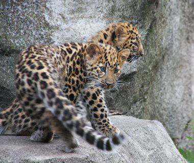 Cutest Baby Animals At U S Zoos Baby Animals Newborn Animals Zoo Babies