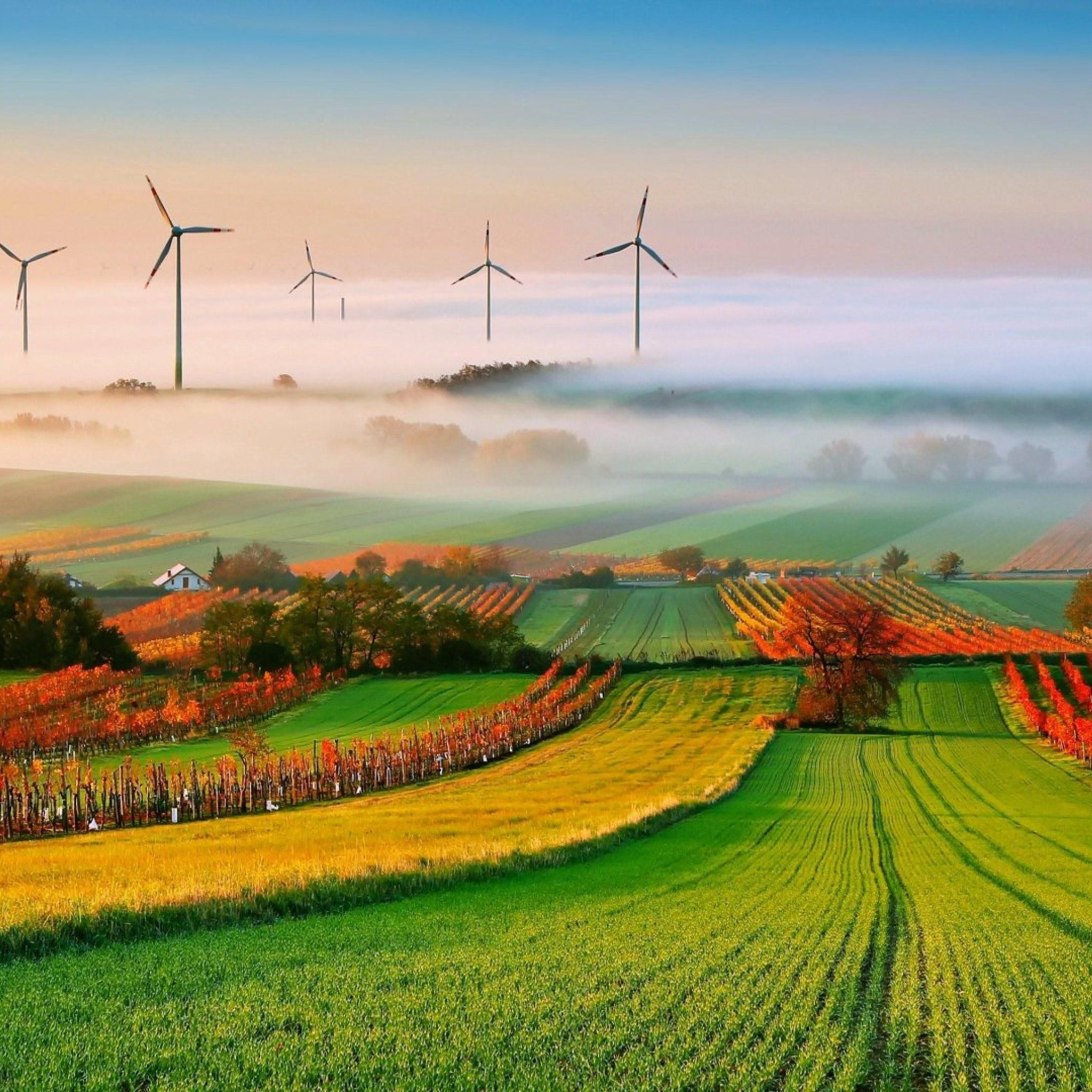 Windmills In The Autumn Field Tap To See More Windmill Stock Wallpapers Mobile9 Field Wallpaper Vineyard Art Landscape