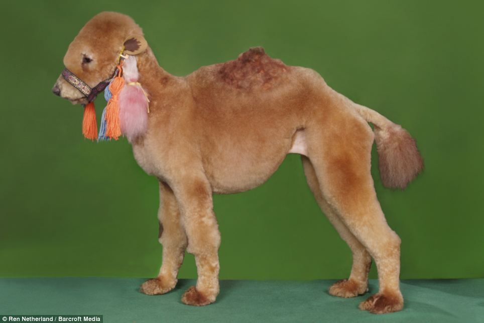 Poodle Doodle: dogs are transformed into pandas, horses even snails in barking mad grooming craze