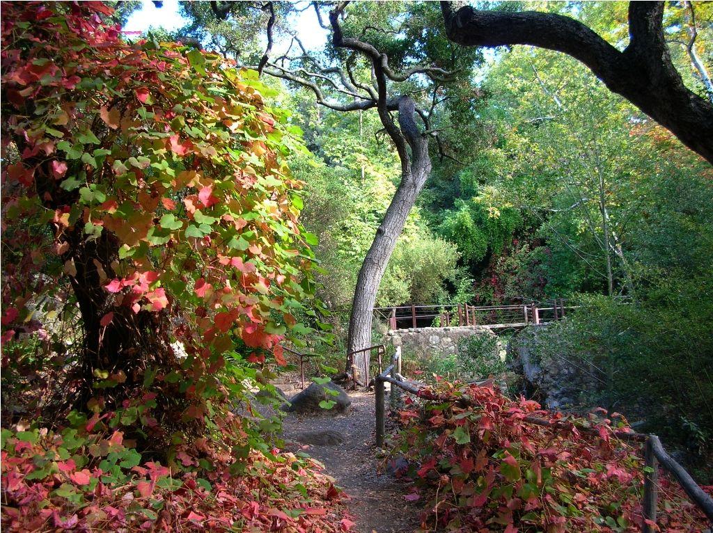 Santa Barbara Botanic Garden Holiday Marketplace