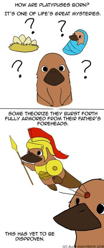 68801022316d http://itsnoisy.tumblr.com #platypus #comic #cute Platypus
