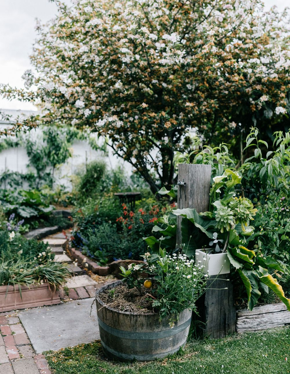 A Suburban Geelong Backyard Turned Thriving Permaculture ...