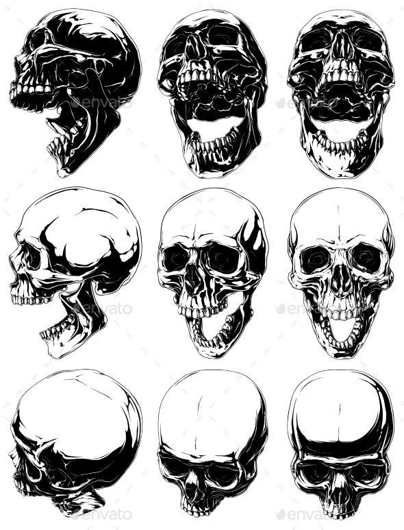 Realistic Detailed Graphic Skulls Vector Set Skull Drawing Sketches Skull Sketch Skull Drawing