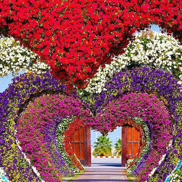 Dubai Miracle Garden - U.A.E  Tag someone you love  Picture by @JhimGreg by wonderful_places